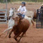 campdrafting for beginners
